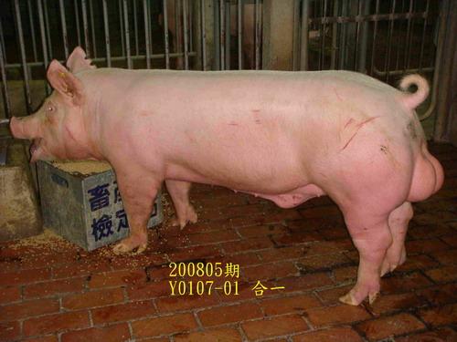 中央畜產會200805期Y0107-01拍賣照片