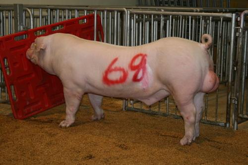 中央畜產會200805期L0355-03拍賣照片(高價豬)