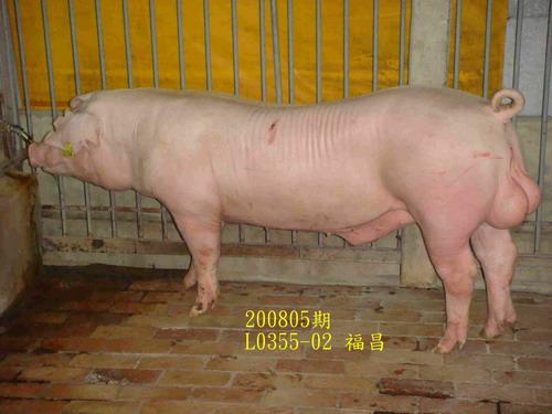 中央畜產會200805期L0355-02拍賣照片