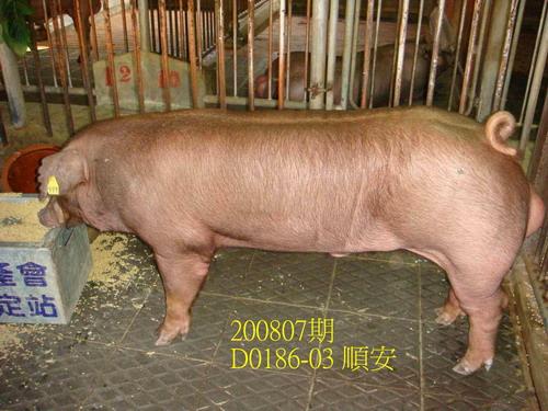 中央畜產會200807期D0186-03拍賣照片