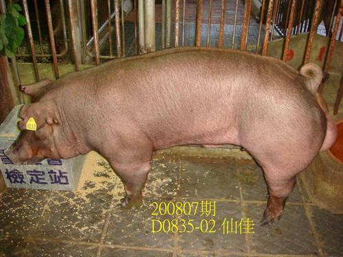 中央畜產會200807期D0835-02拍賣照片