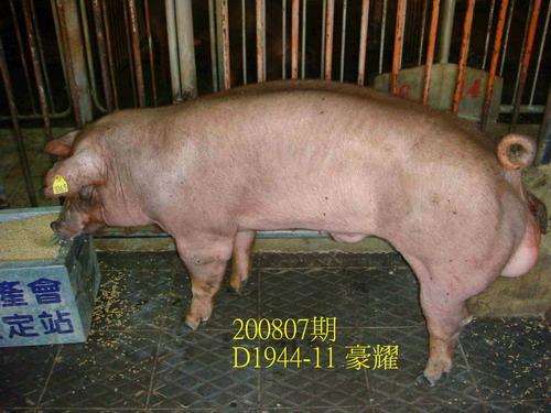 中央畜產會200807期D1944-11拍賣照片