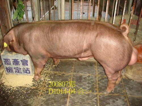 中央畜產會200807期D1014-04拍賣照片