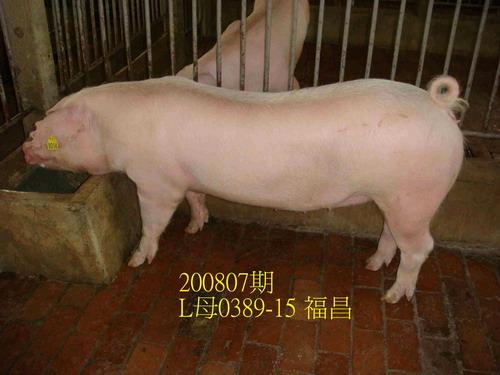 中央畜產會200807期L0389-15拍賣照片
