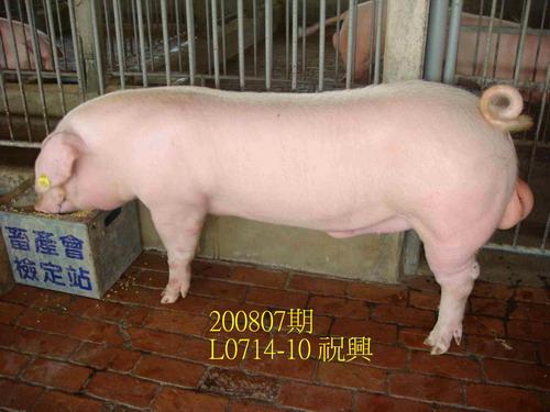 中央畜產會200807期L0714-10拍賣照片