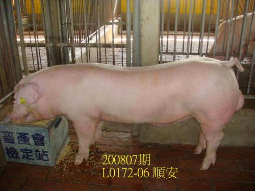 中央畜產會200807期L0172-06拍賣照片