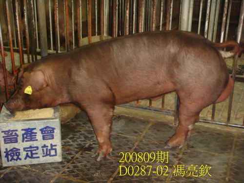 中央畜產會200809期D0287-02拍賣照片