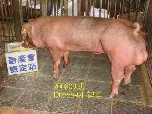中央畜產會200809期D0566-01拍賣照片