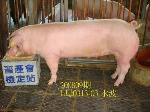 中央畜產會200809期L0313-03拍賣照片