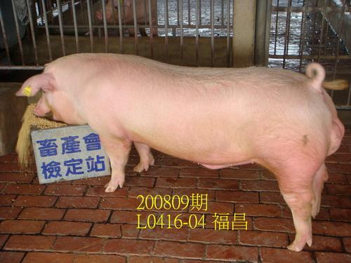 中央畜產會200809期L0416-04拍賣照片