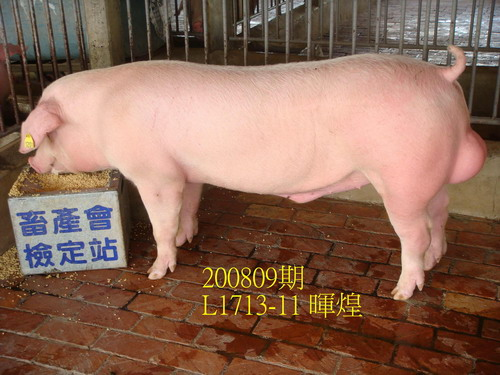 中央畜產會200809期L1713-11拍賣照片