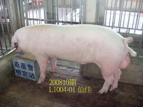 中央畜產會200810期L1004-01拍賣照片