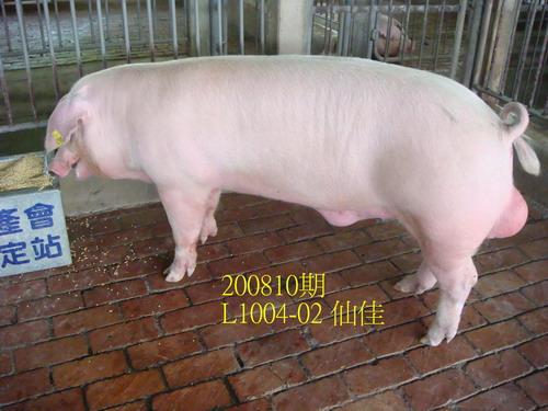 中央畜產會200810期L1004-02拍賣照片