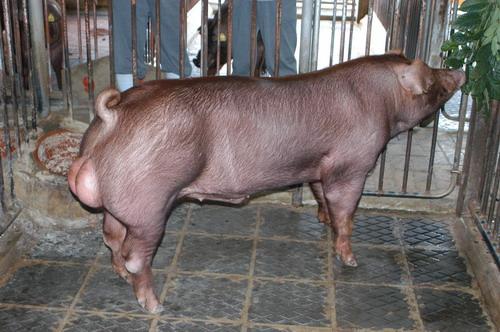 中央畜產會200811期D0304-02型-全身相片