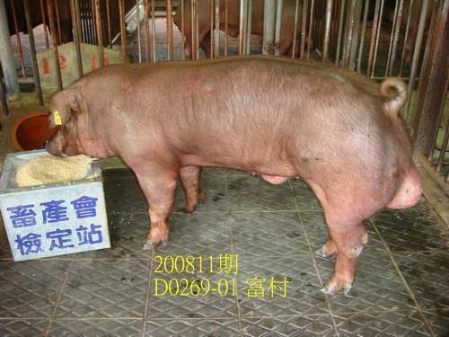 中央畜產會200811期D0269-01拍賣照片