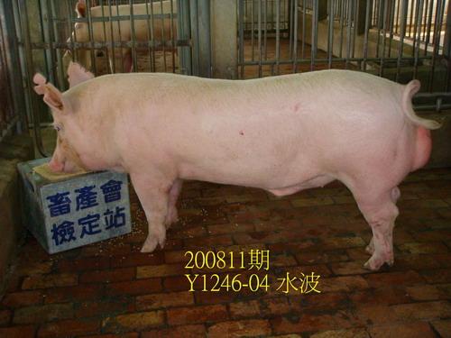 中央畜產會200811期Y1246-04拍賣照片