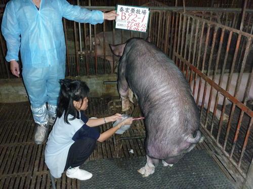 27-台灣種豬發展協會9805期B0092-01採精相片.jpg