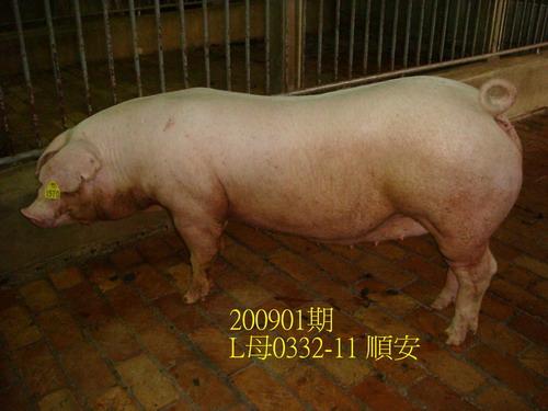 中央畜產會200901期L0332-11拍賣照片