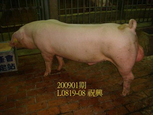 中央畜產會200901期L0819-08拍賣照片