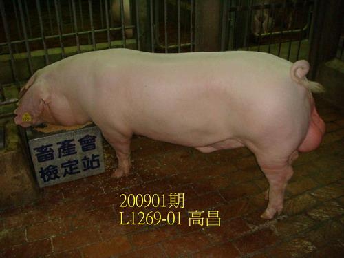 中央畜產會200901期L1269-01拍賣照片