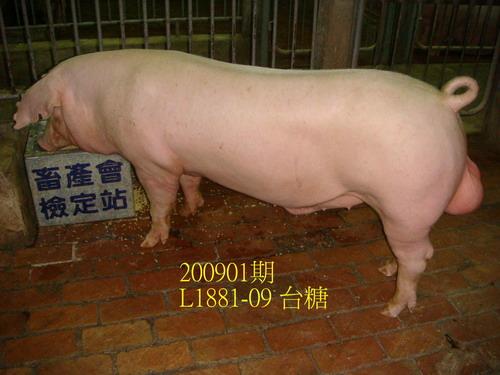 中央畜產會200901期L1881-09拍賣照片
