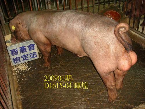 中央畜產會200901期D1615-04拍賣照片