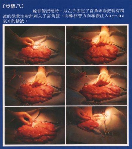 豬輸卵管授精-輸卵管授精步驟8