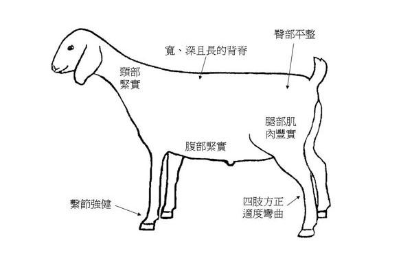 選拔肉用山羊-1理想體型