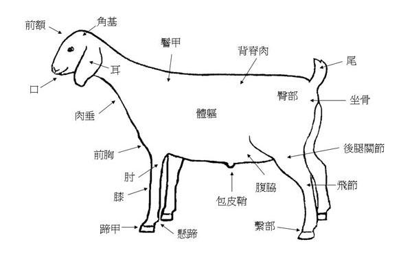 選拔肉用山羊-2部位名稱