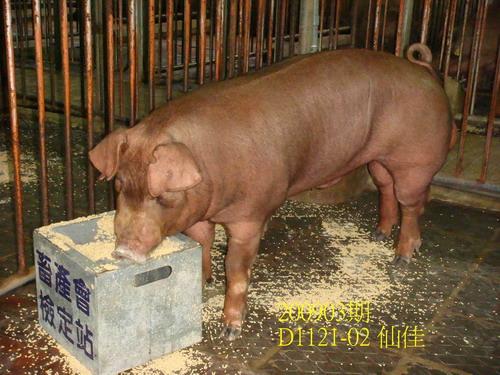 中央畜產會200903期D1121-02拍賣照片