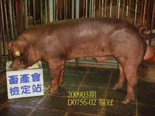 中央畜產會200903期D0756-02拍賣照片