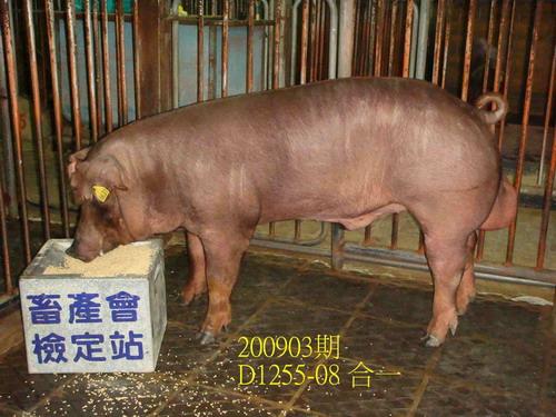 中央畜產會200903期D1255-08拍賣照片