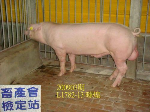 中央畜產會200903期L1782-13拍賣照片