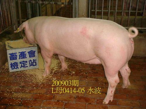 中央畜產會200903期L0414-05拍賣照片