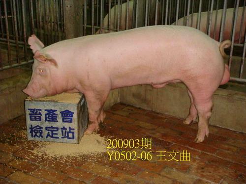 中央畜產會200903期Y0502-06拍賣照片