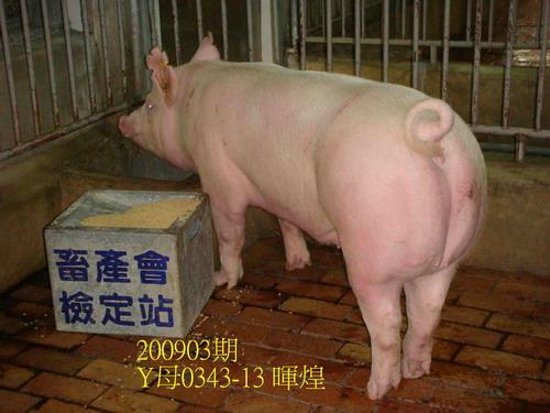 中央畜產會200903期Y0343-13拍賣照片