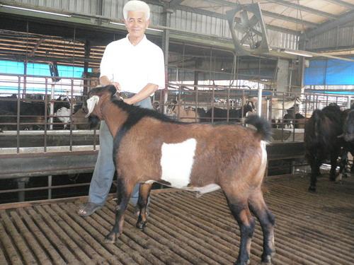 新聯興農牧場種羊