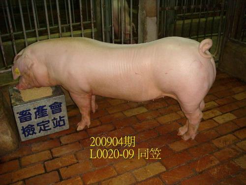 中央畜產會200904期L0020-09拍賣照片