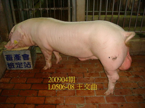 中央畜產會200904期L0506-08拍賣照片