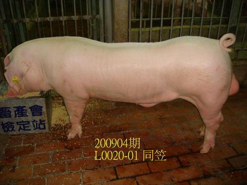 中央畜產會200904期L0020-01拍賣照片