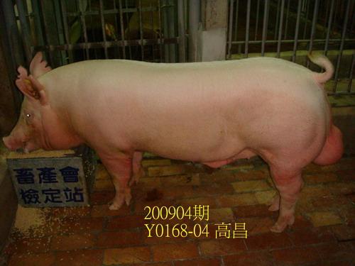 中央畜產會200904期Y0168-04拍賣照片