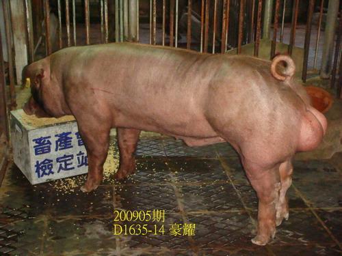 中央畜產會200905期D1635-14拍賣照片