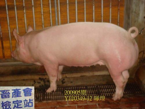 中央畜產會200905期Y0349-12拍賣照片
