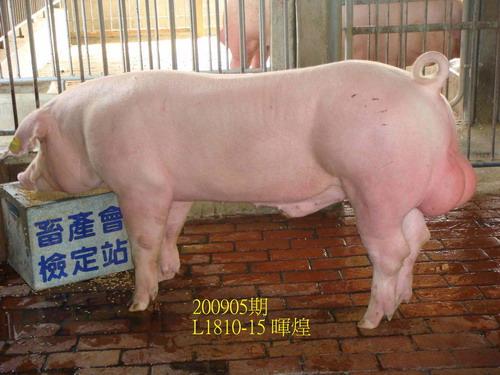 中央畜產會200905期L1810-15拍賣照片