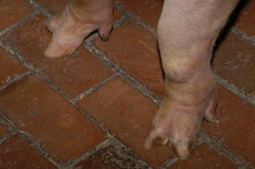 中央畜產會200905期L0464-10體型-四肢相片