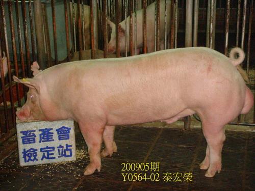 中央畜產會200905期Y0564-02拍賣照片