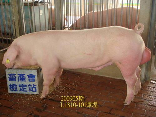 中央畜產會200905期L1810-10拍賣照片