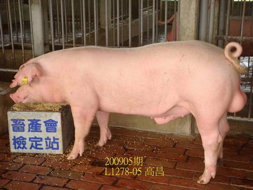 中央畜產會200905期L1278-05體型-全身相片