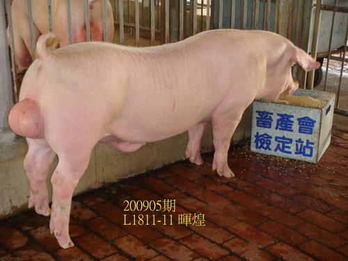 中央畜產會200905期L1811-11拍賣照片