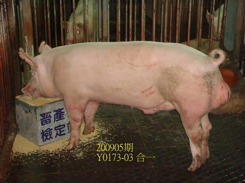 中央畜產會200905期Y0173-03拍賣照片